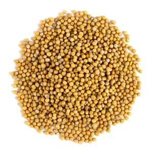 Mustard Seed Yellow W organic 1lb