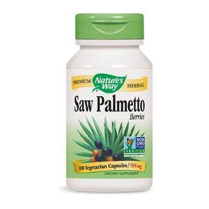 Saw Palmetto NW