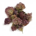 Red Clover Tops W 1lb